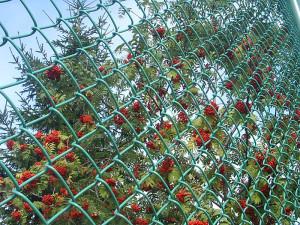 Ограда из сетки Рабица