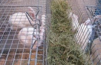 Клетка для кроликов.