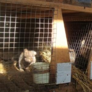 Крольчатник из сварной сетки.